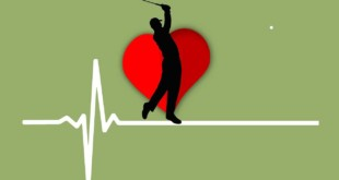 Das Herz-Kreislaufsystem und die Gefäße